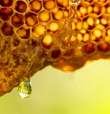 Leading Honey Manufacturer Company In India, Best Quality